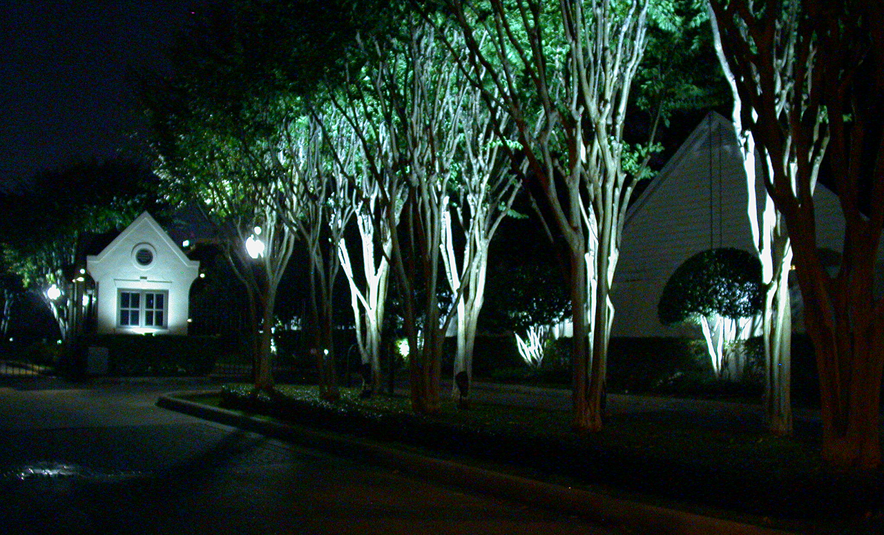 Natural Concepts light fixtures lighting small trees and a office building
