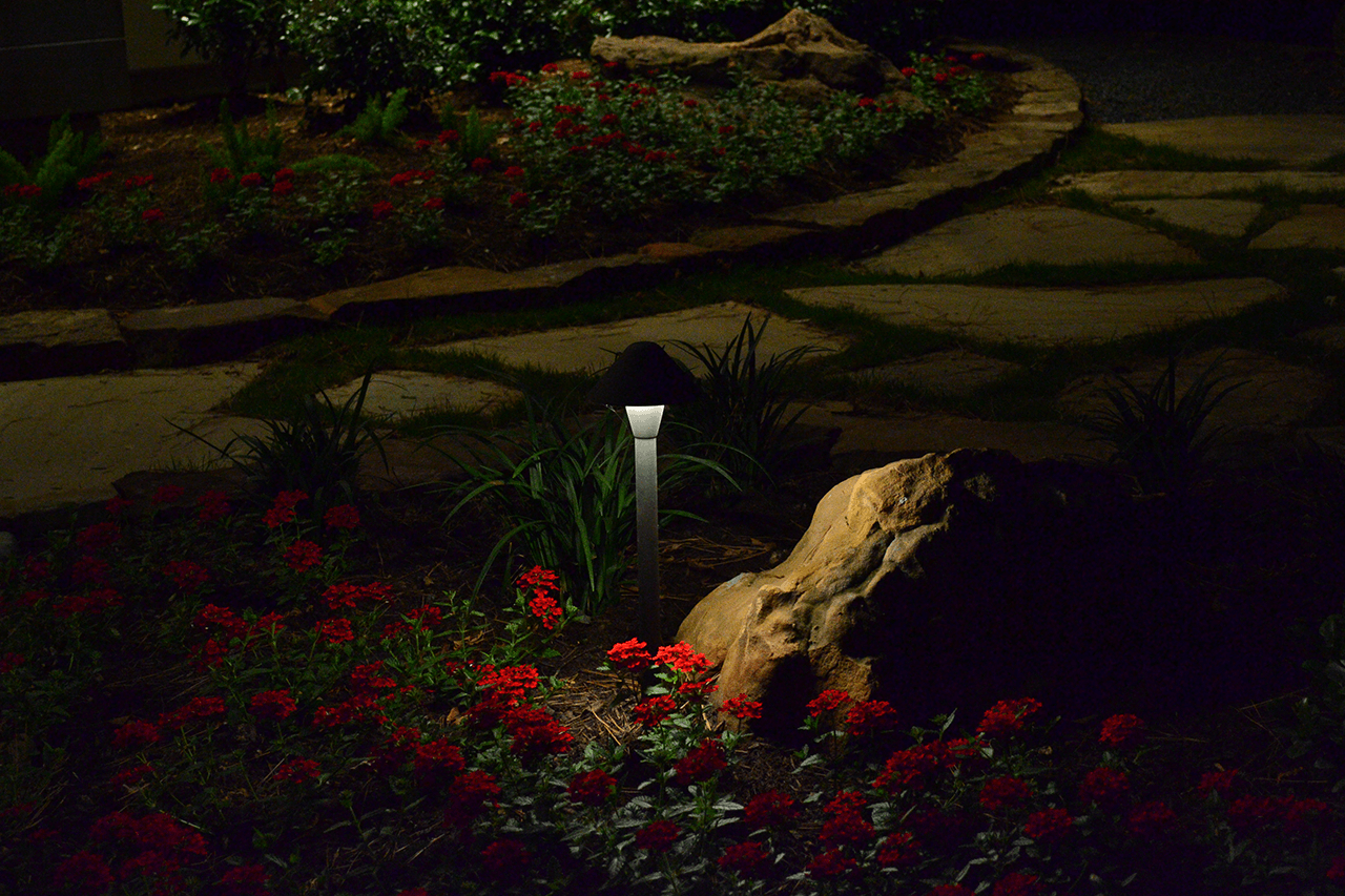 A small path light in a bed of red flowers