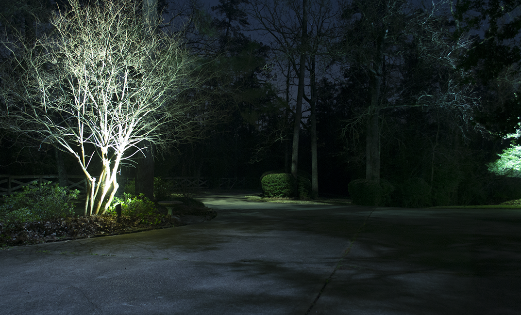 Trees on either side of a driveway being lighted with delicate white lights